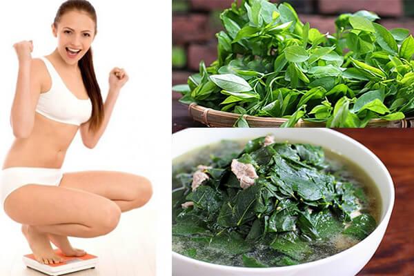 giảm cân bằng rau ngót,giảm cân với rau ngót,giảm cân bằng nước rau ngót,cách giảm cân bằng rau ngót,giảm cân bằng rau bồ ngót