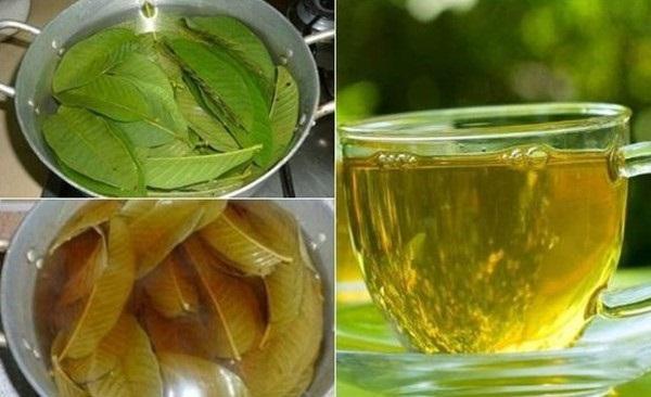 cách uống nước trà lá ổi giảm cân với (bằng) lá ổi